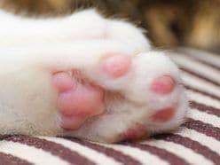 【動画あり】眠いニャン……子猫のウトウト姿が、悶絶級のかわいさ!