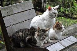 猫好きゆえの異常行動!?パンサー管の深夜徘徊にドン引き