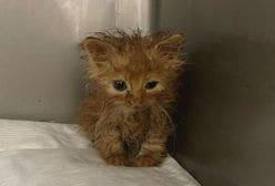 石田ゆり子、病気の赤ちゃん猫を保護「お節介な気持ちから……」