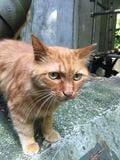 街角の猫ちゃんモフキュン写真館【近づいてみました編】の画像006