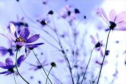 King&Prince平野紫耀のイメージ崩壊? 天然発言連発に「スタジオから悲鳴」