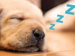寒くてもグッスリ眠れる「熟睡術」冬の不眠は命にかかわる!