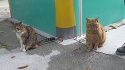 ニャンと! ネコの園長と副園長がいる動物園